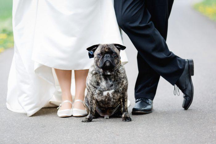 Wedding pair, feet with dog looking at camera, hochzeitsfotograf, Wittlich, Andrea Schenke Photography