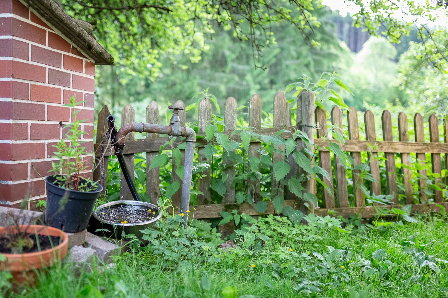 Green garden with wooden fence, ANdrea Schenke Photography, Wittlich