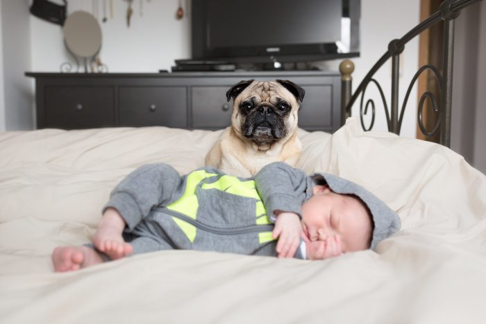 Newborn, Sleeping Baby with dog, Andrea Schenke Photography, Fotograf, Wittlich